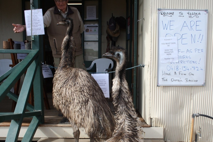 Two emus banned from the Yaraka Hotel in south-west Queensland.