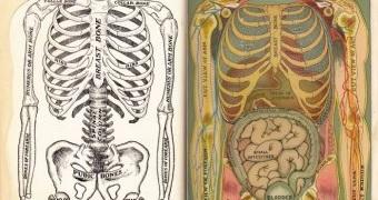 Burning question: gut health