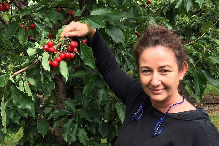 A woman standing in front of a cherry tree holding a bunch of cherries