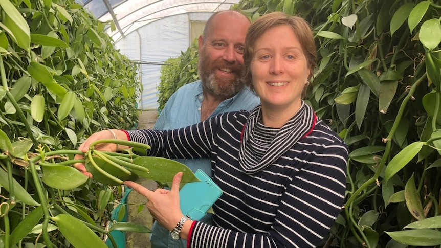 Two people standing in the greenhouse amongst lush vines, hold up a hand of green vanilla beans.