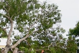 An SES worker tends to a fallen tree in Bowen after Cyclone Anthony made landfall overnight.