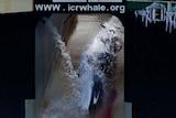 Whaling program dialled down before program relaunch