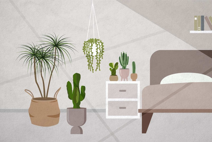An illustration of cacti and succulents in bright sunlight inside a bedroom, few plants can tolerate intense light.