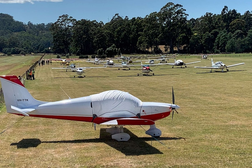 A field of around 30 small planes are parked in a field with trees in the background.