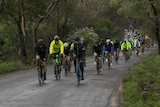 Large group of cyclists on an unidentified road in Tasmania, as part of the 2018 Tour de Mo event