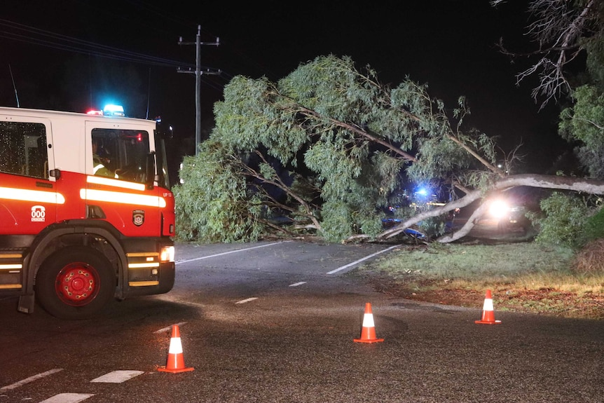 A large tree lies on a road at night after being blown over in a storm, with a fire truck parked to the left.