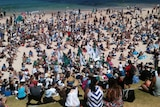 Thousands attend rally against WA shark culling policy