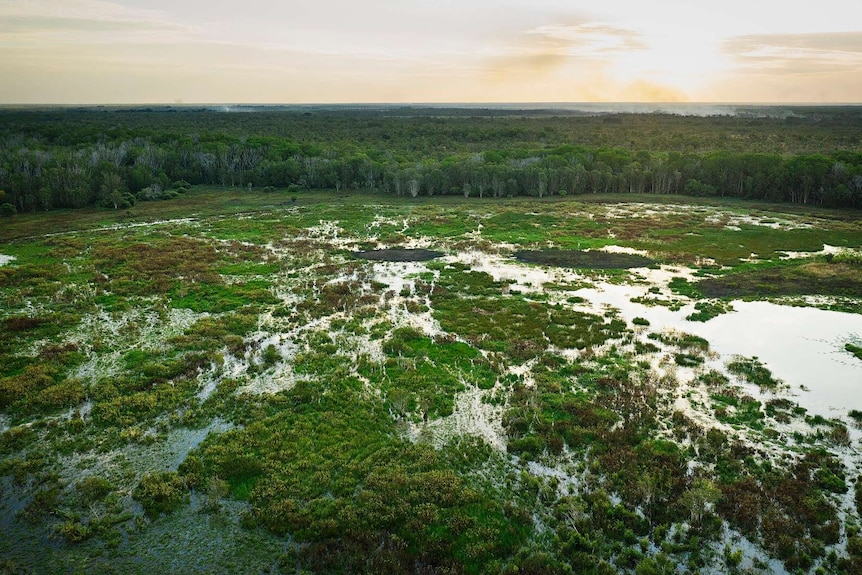 Fogg Dam drone shot shows lush green wetlands.