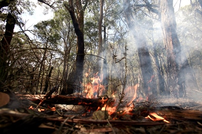 File photo: Forrest fire in Healesville (Getty Images: Luis Ascui)