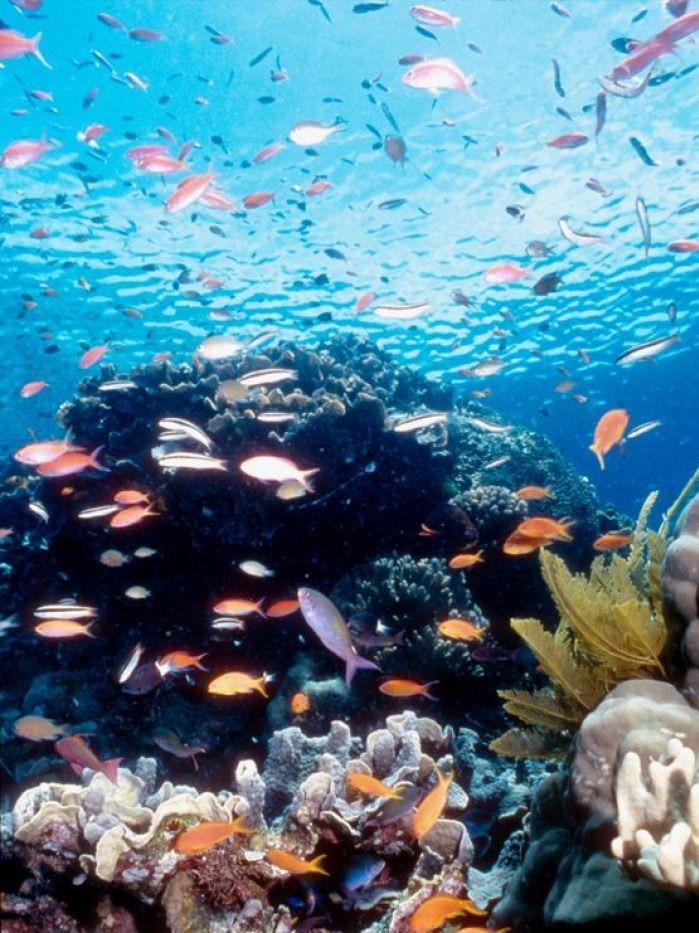Fish losing survival instinct in acidic oceans, study says