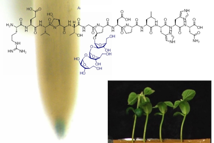 young legume plants with chemical formula imposed over the image