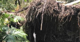 Arborists work around fallen tree