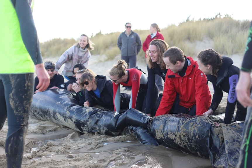 Volunteers push air out of giant inflatable whale