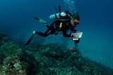 A diver takes notes on a clipboard while swimming.