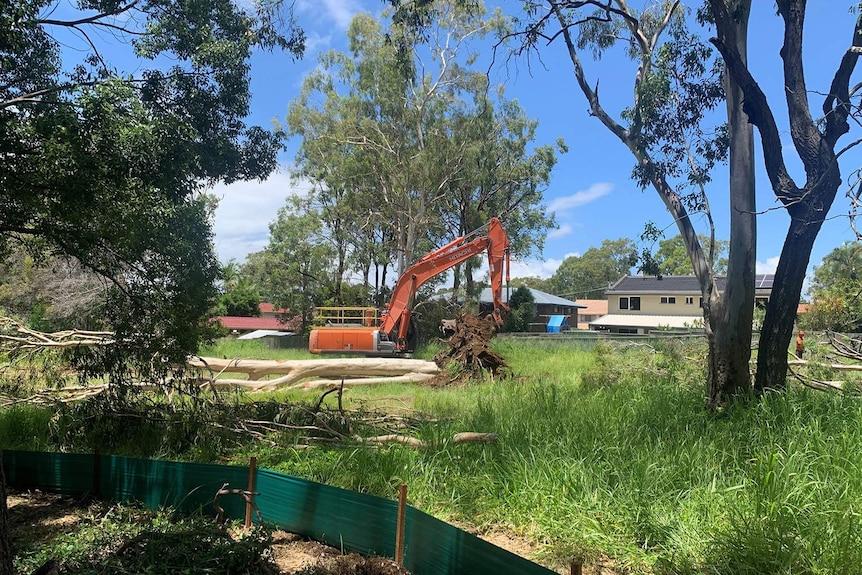 考拉栖息地的树木被砍伐