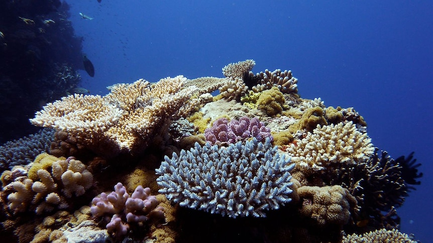 Reef in crisis