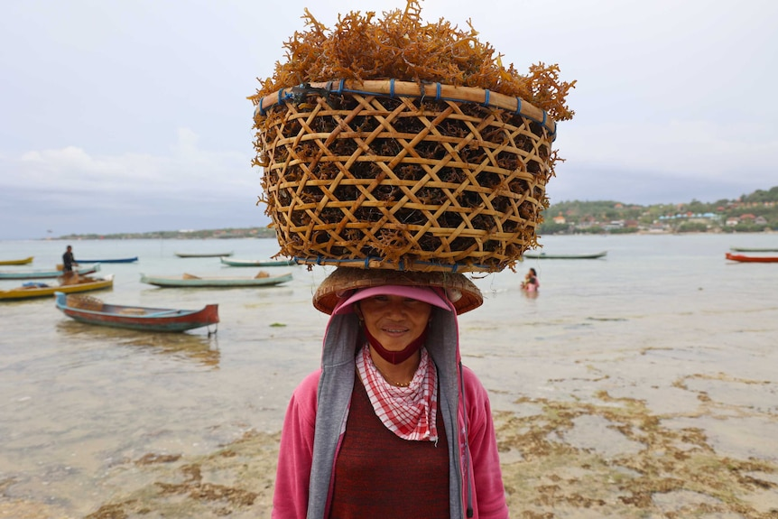 A woman carrying seaweed in a basket on her head.