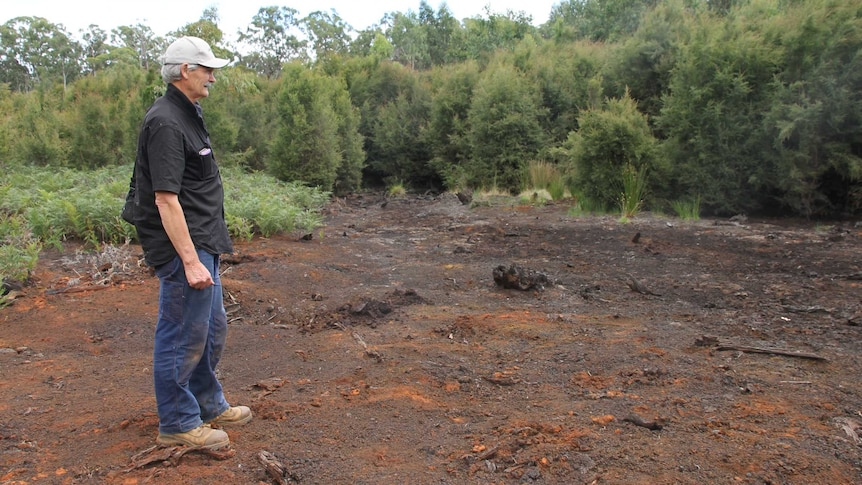 A man stands in a burnt out patch of dirt that used to be a swamp. It's surrounded by small young trees and bracken ferns.