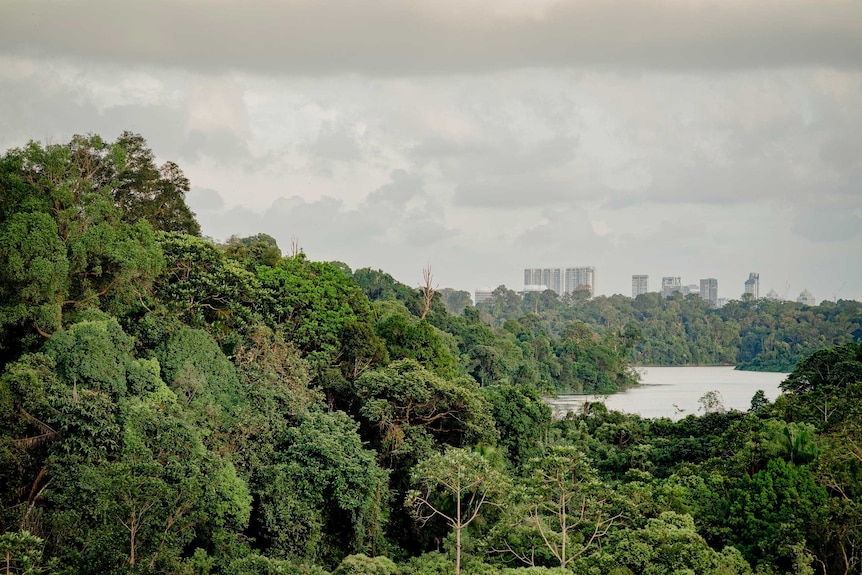 Central Catchment Nature Reserve in Singapore
