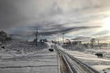 Cattle near wind farm after snow fall.