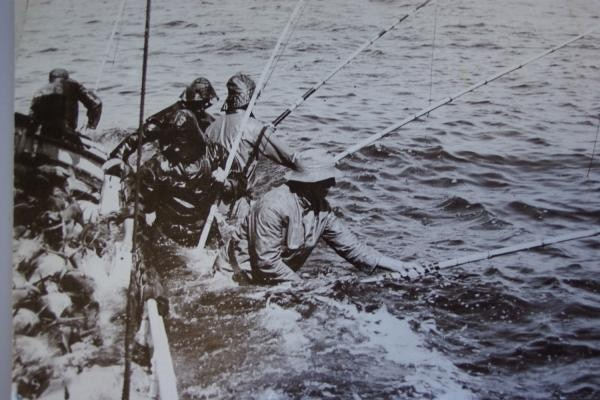 Four men stand in tuna wracks on the Tacoma, submerged in water, poling tuna.