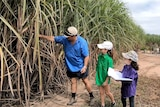 Frank Mugica and his daughters inspecting tall sugar cane stalks.