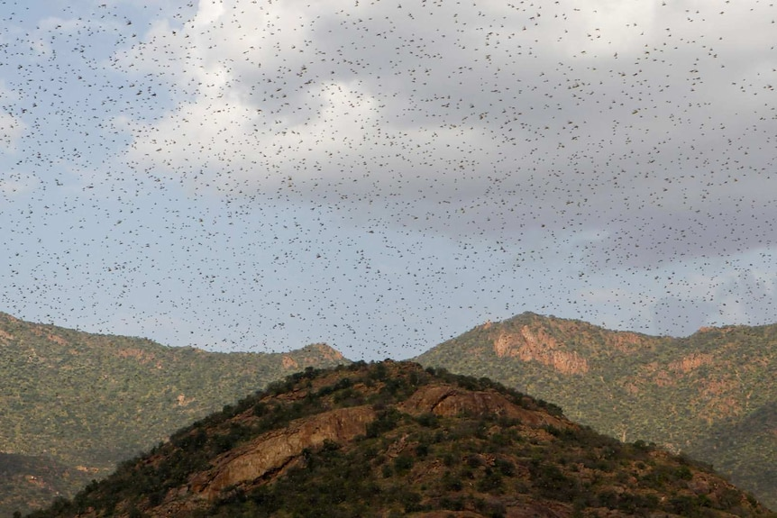 A photo taken from a mountain peak looking over the range. The sky is so completely dotted with insects, it resembles snowfall.
