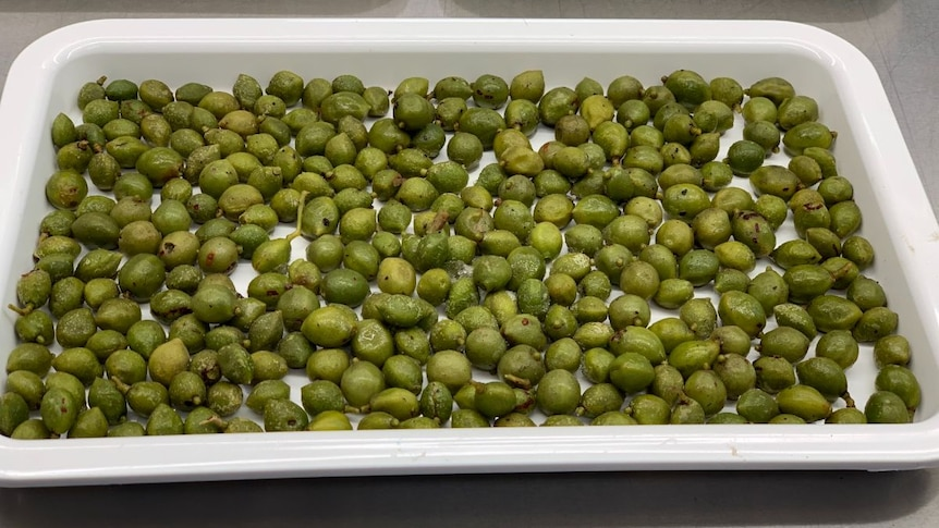 A tray of small green plums.