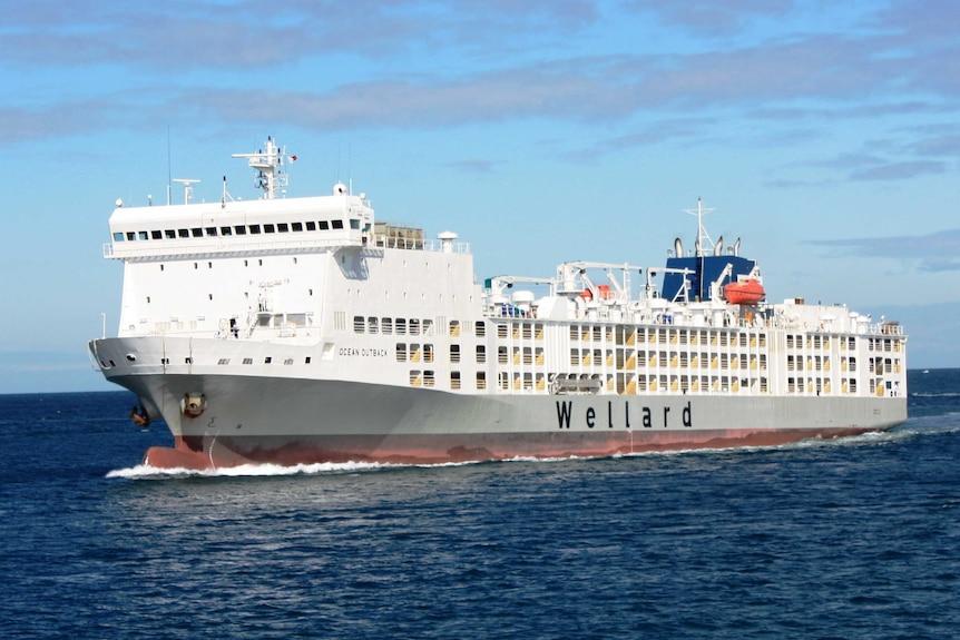 Live export ship concerns