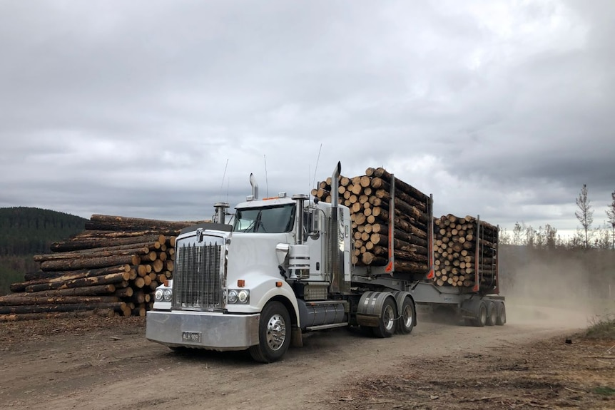 A truck with a full load of blackened timber drives down a dirt road.
