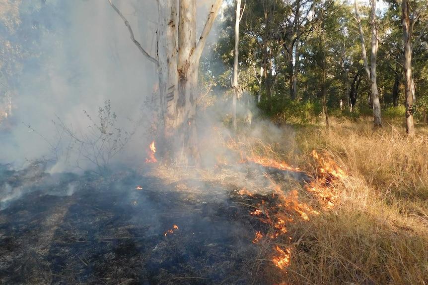 Bushland and grassland burning