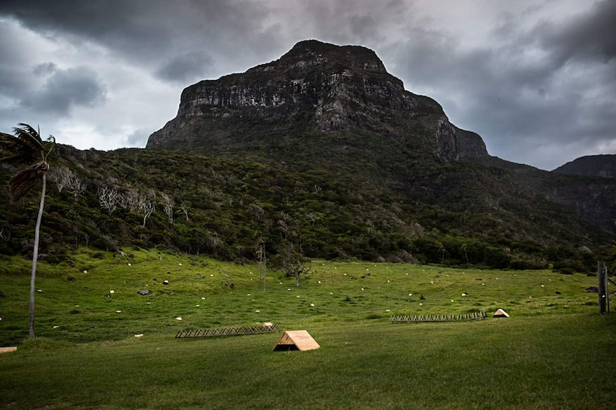Several small wooden boxes in a field, with a large mountain towering behind.