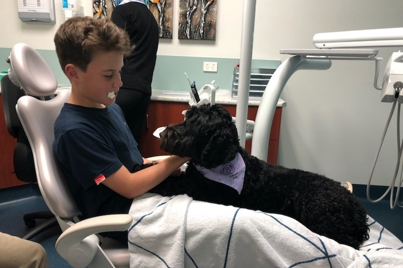 The black dental therapy dog sits on the lap of Alex Gorman who has just been treated by the dentist.