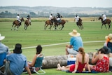 Spectators watch polo competitors in action.