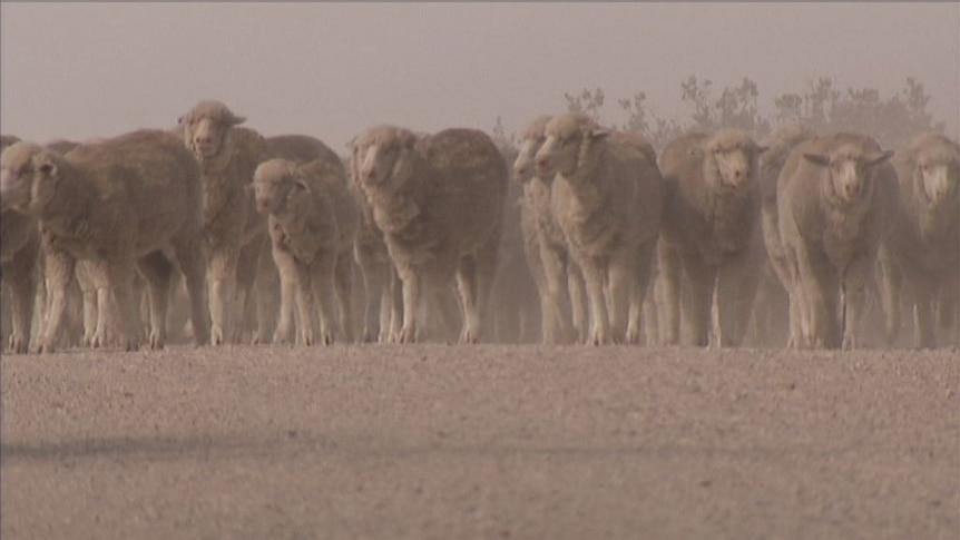 Brave environmental move by bushfire-hit farmer