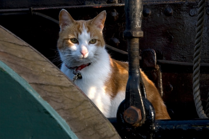 Cat on a ship