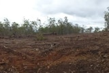 Farmers have vowed to fight new tree clearing legislation, which has been introduced by the Palaszczuk government.