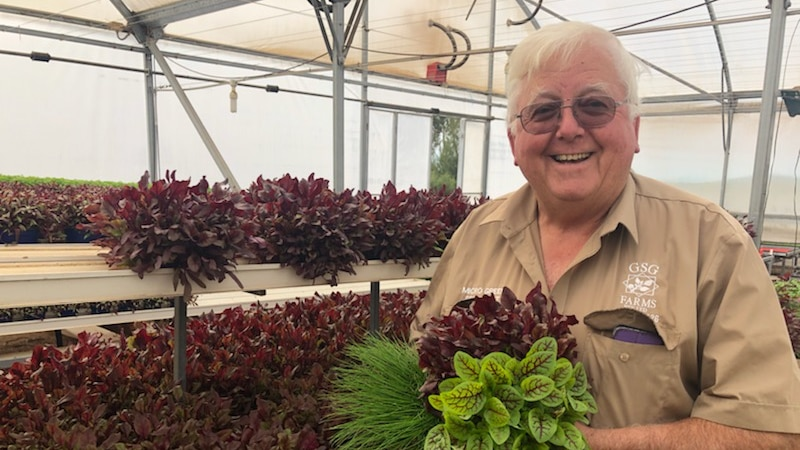 A man is standing on the right of the picture holding a bunch of purple and green micro herbs in a greenhouse
