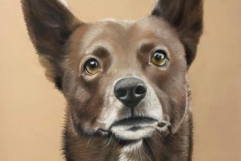 A portrait of a brown dog with white around its mouth, sitting.