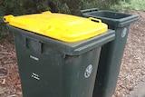 Yellow lidded recycling wheelie bin in Canberra ACT