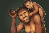A sketch of a half ape, half human looking female species with an infant on her back