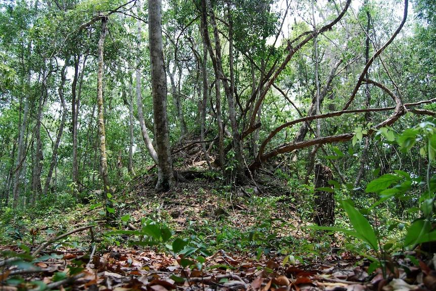 Trees grow over a steep mound.