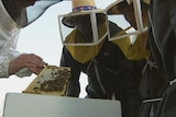 Refugees and migrants take part in a beekeeping course in Hobart.