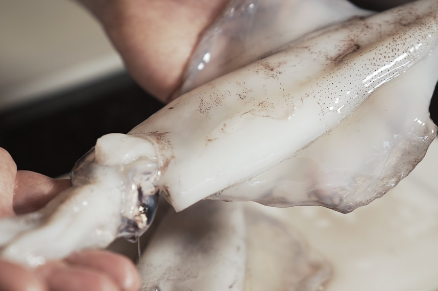 Hands holding a whole raw calamari to depict how to prepare and cook squid.