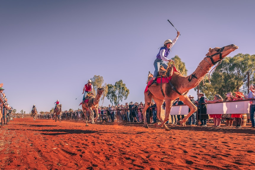 Camels racing with jockeys aboard across the red dirt in the NT