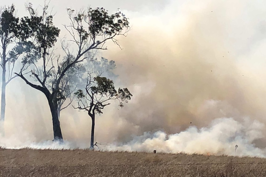 Thick smoke billows around trees, with a dry paddock and barbed wire in the foreground.