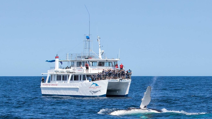 A dolphin-watch boat on the ocean