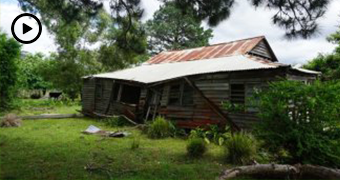 Wide shot of an old abandoned wooden hut in a bush clearing.