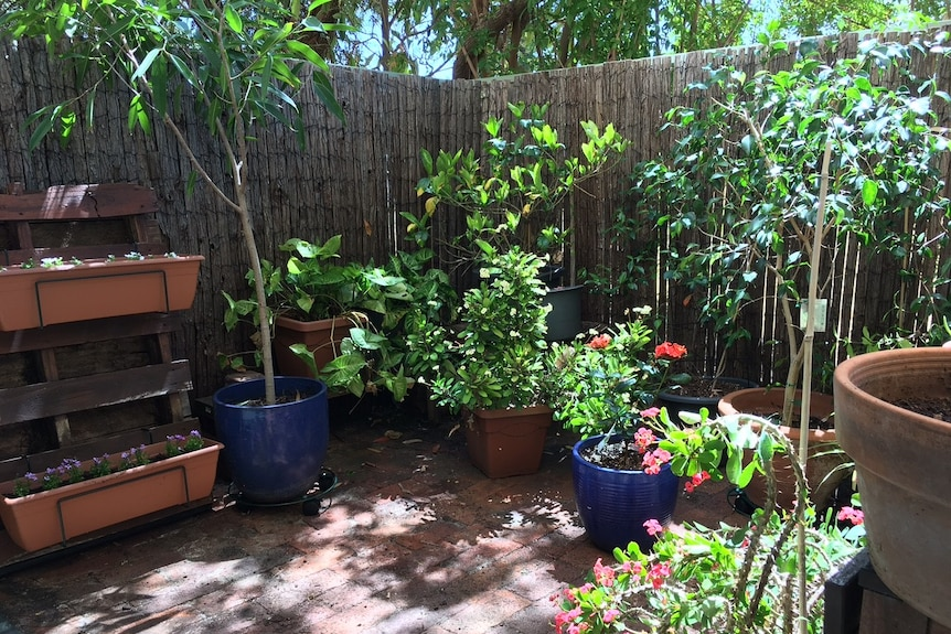 Potted plants in a courtyard.