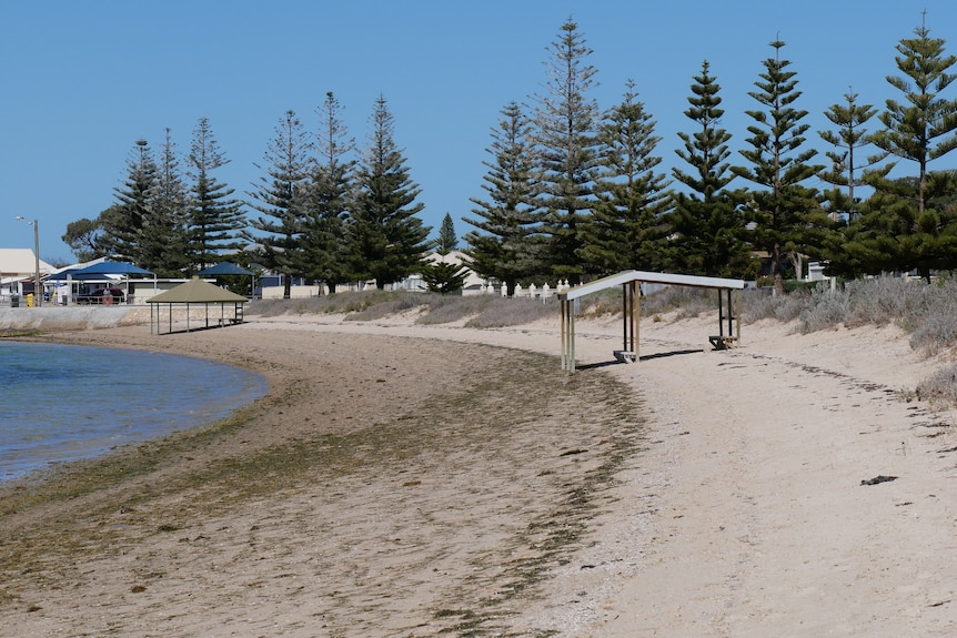 A beach with a shaded structure on the beach with tall pine trees in the background.